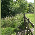 Boundray Gate