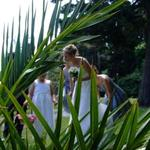 Bride through Palm Leaves