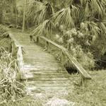 Lil' Bridge