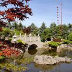 Bridge Reflection & maple leaves - Temple Gardens