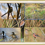 British Birds Collage