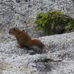 Brown Baby Squirrel