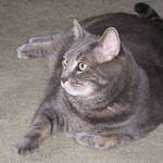 Bubba Fat Cat