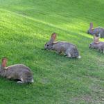 The Lawn Crew