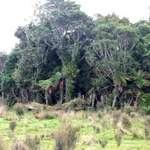 Bush View