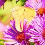 Butterfly Beauty in October