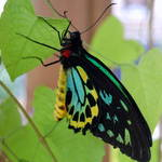 Butterfly ID?
