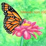 $ dollar $ store monarch
