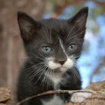 B&W Kitten