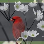 Selective Cardinal