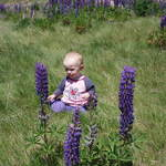 Cassidy In The Lupins