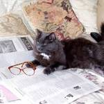 reading the sunday NYT