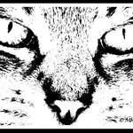 Wild Jasmine Cat