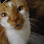 Leo Portrait