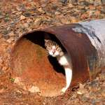 Cat in a culvert