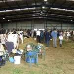 cattle show shed