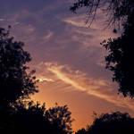 Cirrus Sunset 1