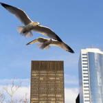 City Seagulls