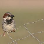 Colorful Little Sparrow