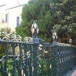 Cornstalk on fence