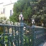 Cornstalk on fence