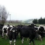 Just Herd
