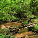 Sherman Creek 05_21_05a