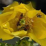 Crowded Flower