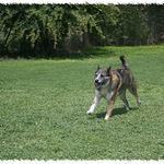 Daisy Running
