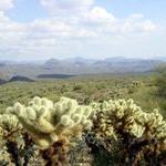 Across the wild desert