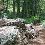 Serene Trail