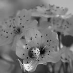 Disguised Ladybug