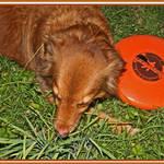 Jessie loves her frisbee