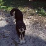 Dog Facing Forward