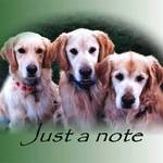 Golden's Just A Note