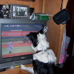 Sampson watching baseball 1