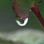Dragon in a droplet