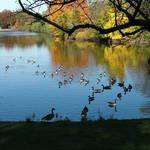 Duck brigade