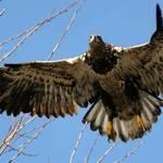 eagle series 3