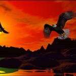 Eagle Shore