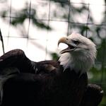 Eagle 06/23