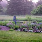 garden in early morning light