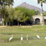 Six Egrets
