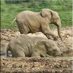 Mud, mud, glorious mud