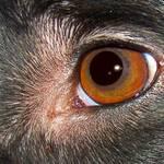 Casper's eye