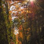 Fall Foliage 1 7