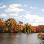 Fall Foliage 1 9
