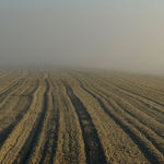 Farmers Field ?