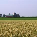 Farm as Flag