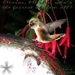 Feisty Hummingbird, beak open at mirror ball